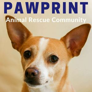 Pawprint | animal rescue podcast for dog, cat, and other animal lovers