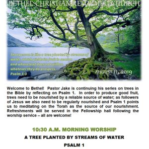 August 11/19   A TREE PLANTED BY STREAMS OF WATER